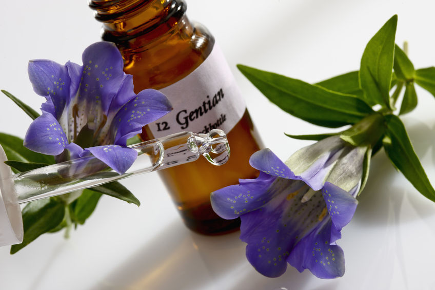 38582443 - gentian and pipette, apothecary flask