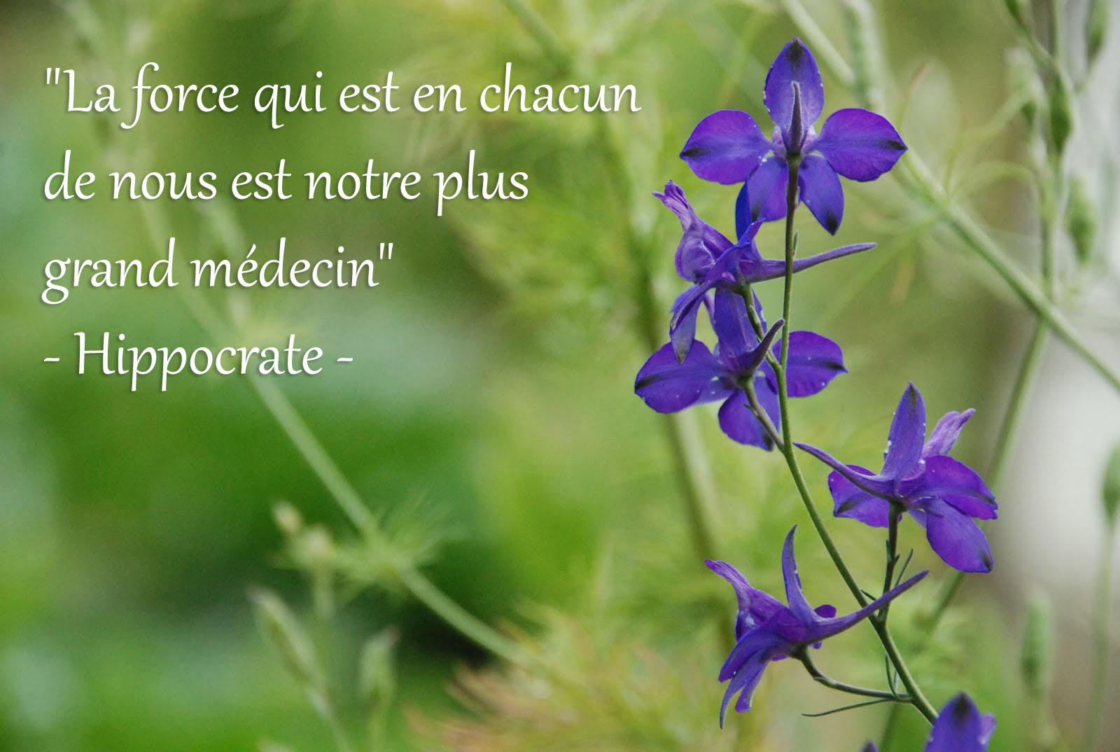 Hippocrate-2