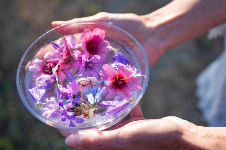 plant tinctures and flower